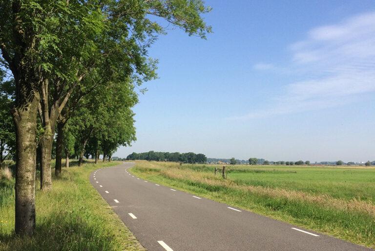 Een fietspad langs een lange rij bomen